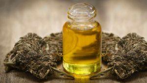 Buy Brandywine Cannabis Oil