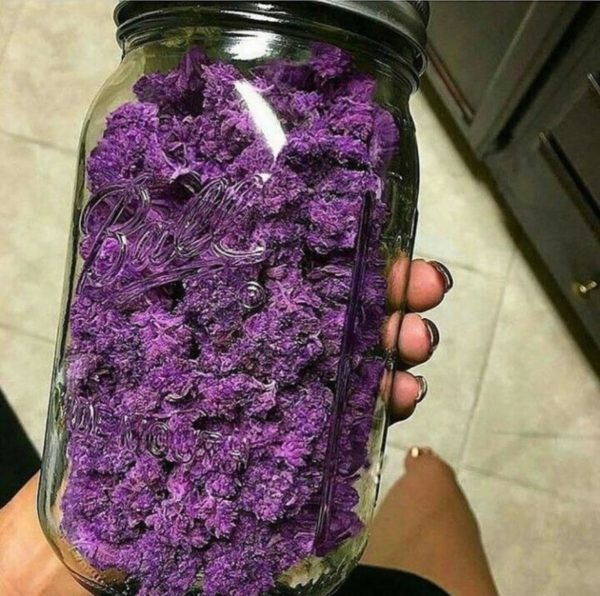 Buy Purple Haze Cannabis Strain