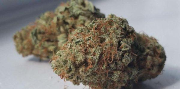 Buy Violator Weed
