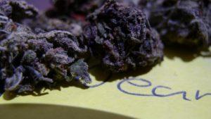 black-cannabis-1280x720
