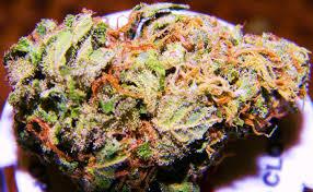 lavender Marijuana Strain