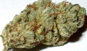 Platinum OG Medical Weed
